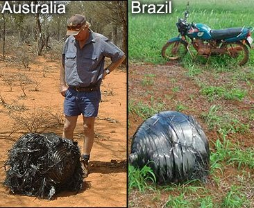 http://www.lassy.ru/novosti/shar_v_avstralii_i_brazilii.jpg